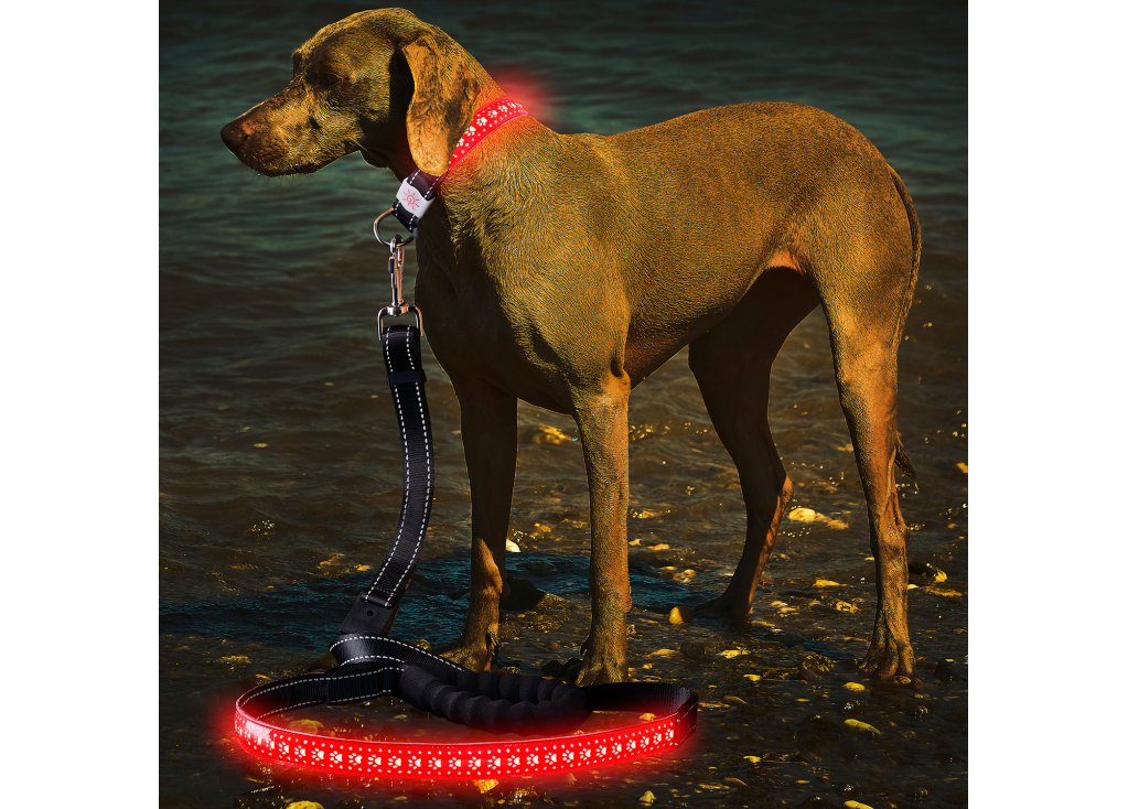 LED Glow Dog Leash - 5 Things You Need to Know About Using Your LED Leash