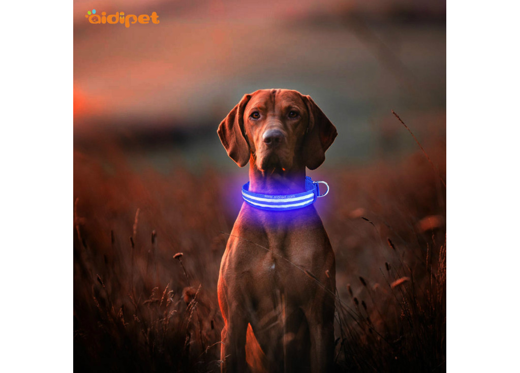 Advantages Of Using Polyester Webbing Pet Collar