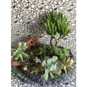 Succulent Plant Gift In A Cute Pot