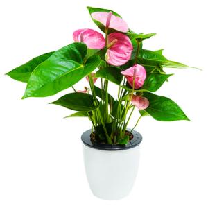 Self-watering Flower Pot