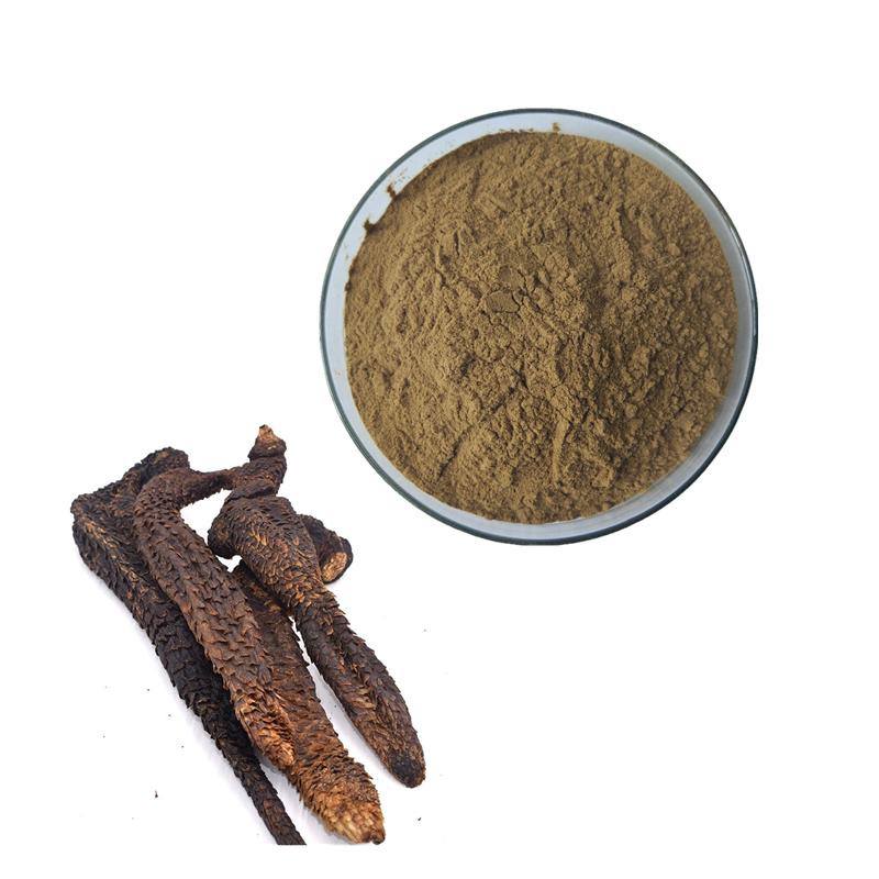 Kosher  Factory Alkali 50:1 Songaria Cynomorium Herb Extract 20:1