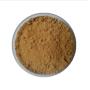 Factory supply high quality Tea tree mushroom extract