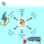 China Factory Nootropic DM235 99% Sunifiram CAS 314728-85-3